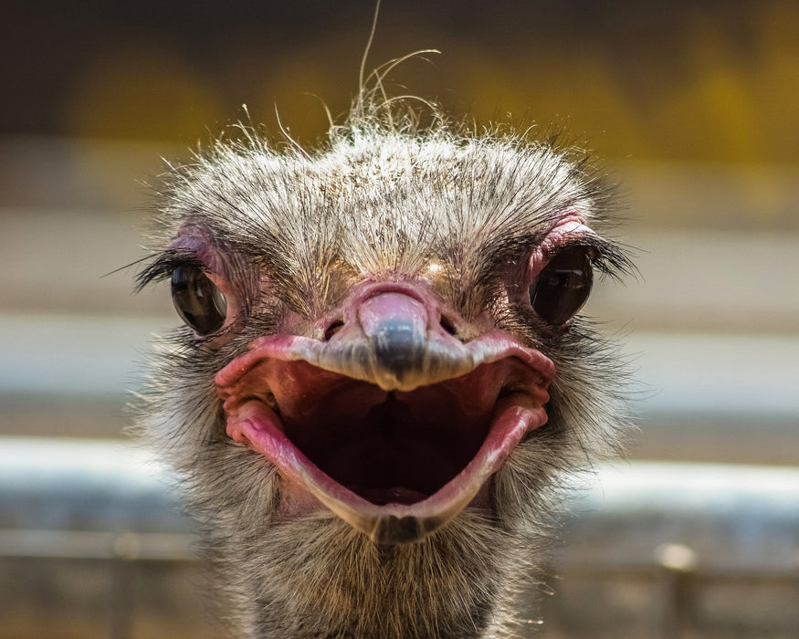 Ostrich Mouth