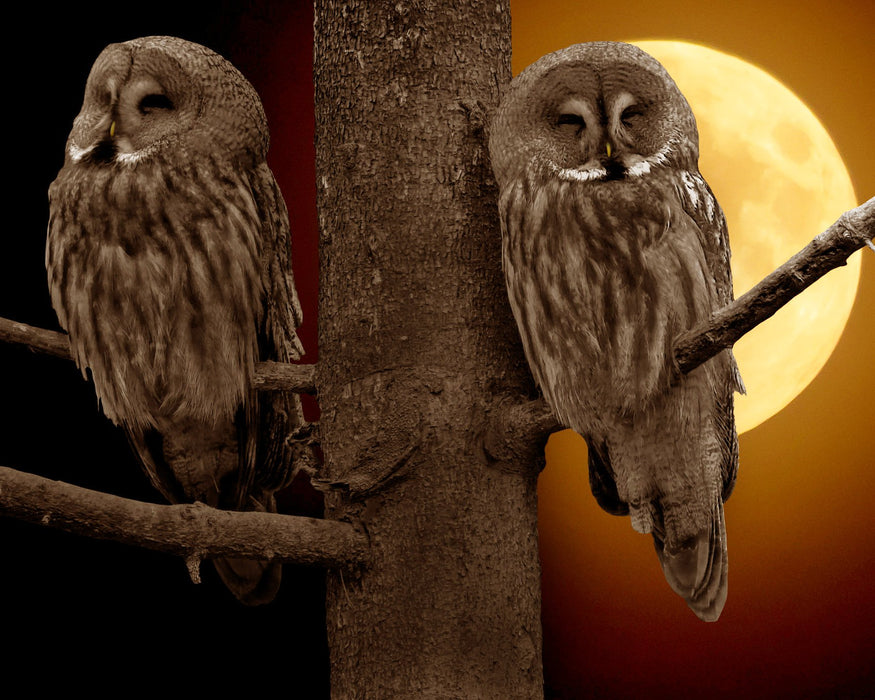 Two Night Owls