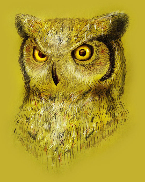 Yellow Owl Art
