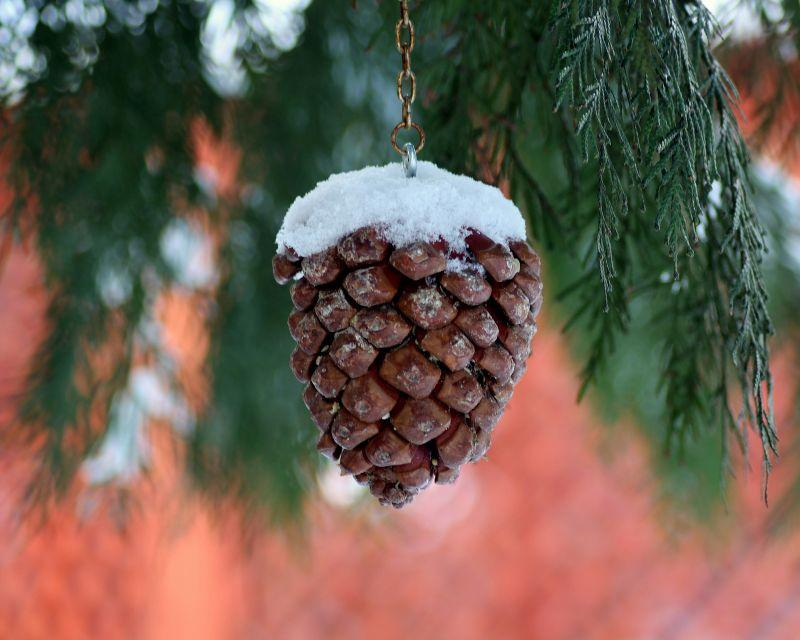 Winter Pinecone