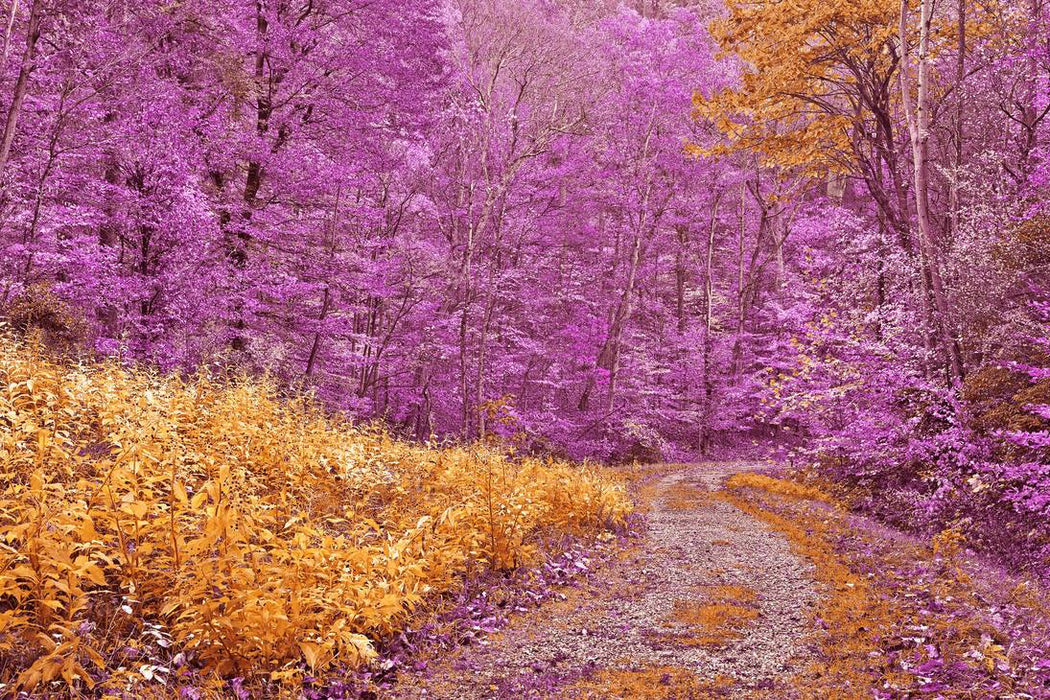 Purple Forest Path