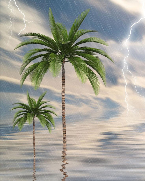 Stormy Palm Trees