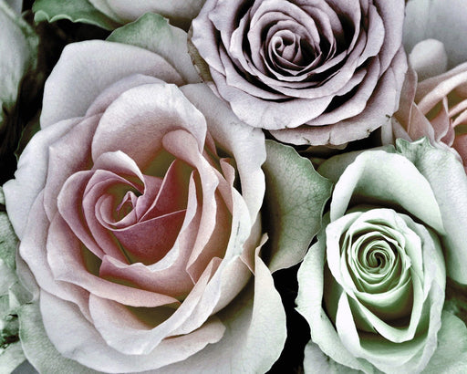 This is a photo of roses looking antique