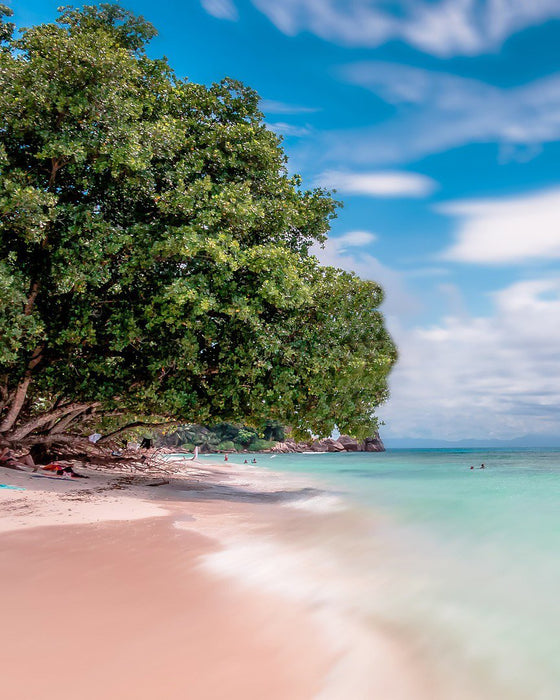 Tropical Beach Tree