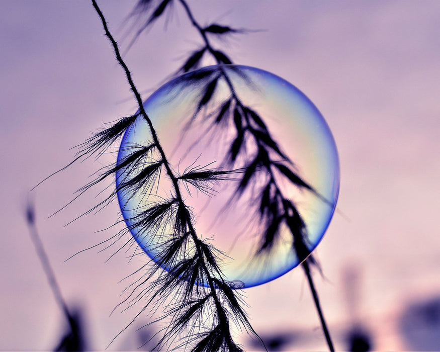 This is a photo of a bubble behind a wheat