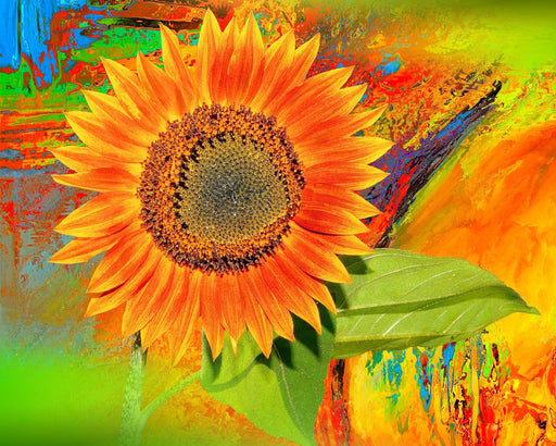 This is an artistic photo of a vibrant colored sunflower