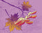 This is a phot of Purple Autumn Leaves