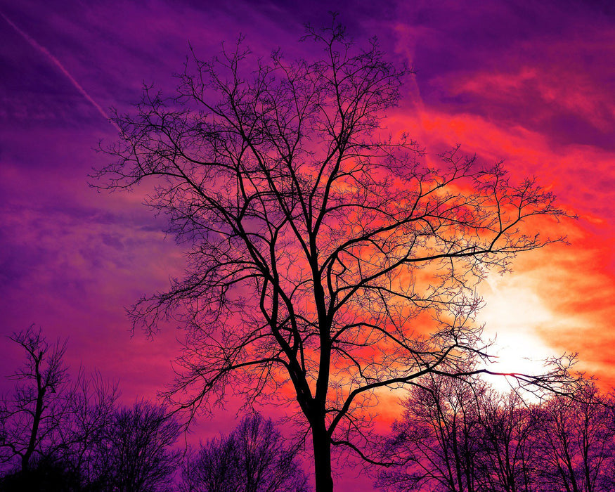 Skies of Purple & Orange