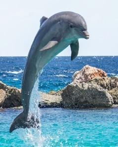 This is a photo of a Leaping Dolphin