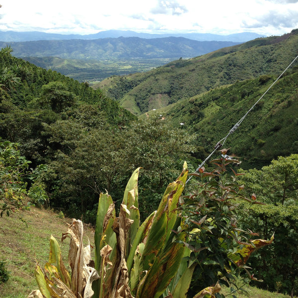 Views of Finca La Chorrera, Pitalito, Huila, Colombia | Hasbean.co.uk