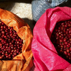 Bolivia La Linda Washed Longberry