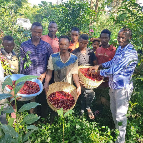 Gemeda Elias Dube and pickers at the Gemeda Elias Dube farm in Shakiso, in the West Guji zone of Ethiopia | Hasbean.co.uk Specialty coffee freshly roasted in Staffordshire