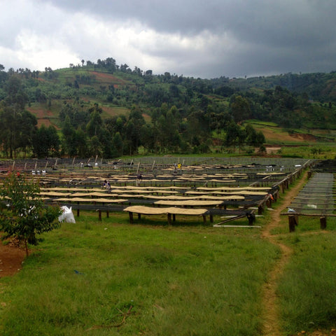 CAFEX Kirundo mill in Kirundo County, North East Burundi | Hasbean.co.uk