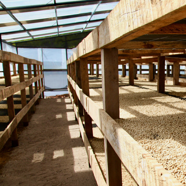 Drying tables. Finca Cerro Azul, Rio Bonito, Siguatepeque, Comayagua, Honduras | Hasbean.co.uk