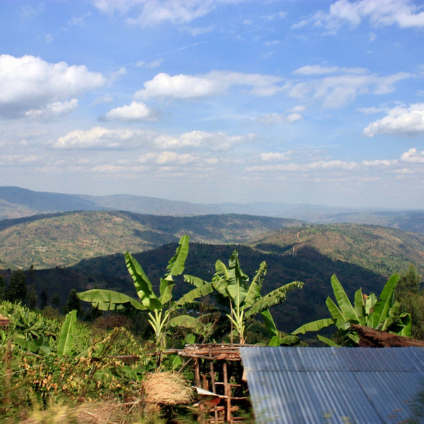 Views from the Mblimia Farm Mill in Rwanda | Hasbean.co.uk