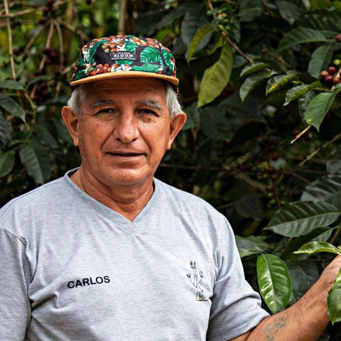Carlos Mariaca. Bolivia Don Carlos Washed Caturra. Hasbean.co.uk