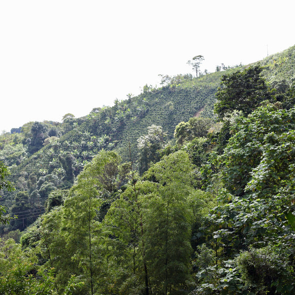 La Chorrera, Pitalito, Huila, Colombia | Hasbean.co.uk