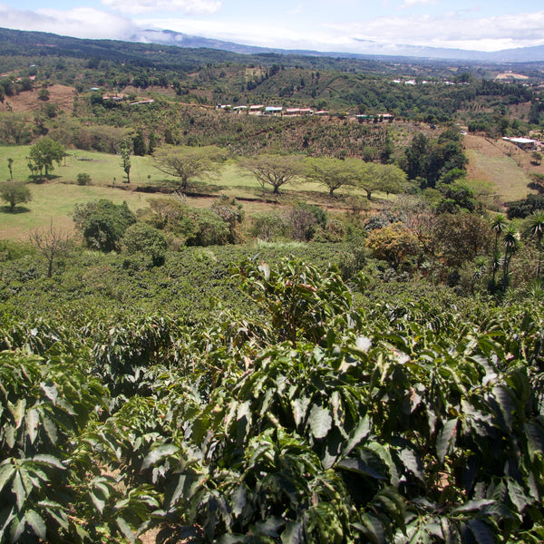 View from Finca Carmela, Western Valley, Costa Rica | Hasbean.co.uk
