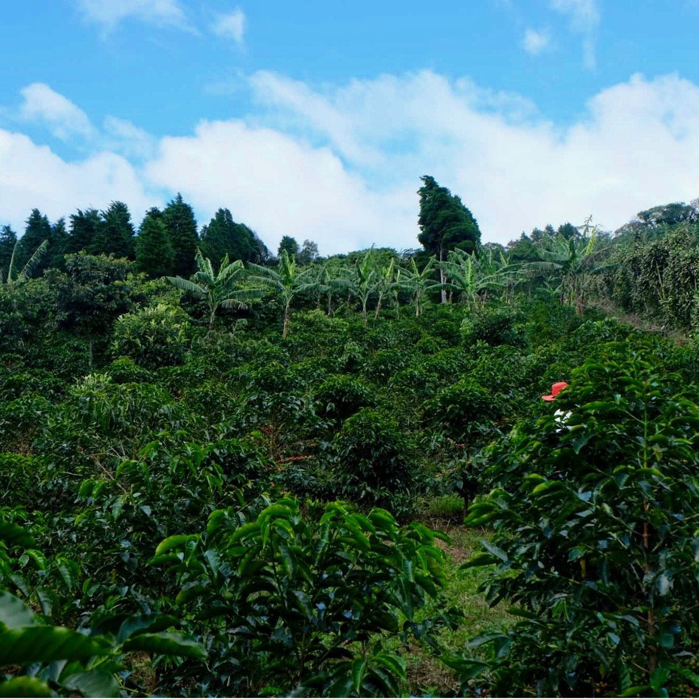 Finca Licho, Alajuela, Costa Rica | Hasbean.co.uk