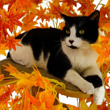 Load image into Gallery viewer, Large Square Luxury Cat Tree Fall