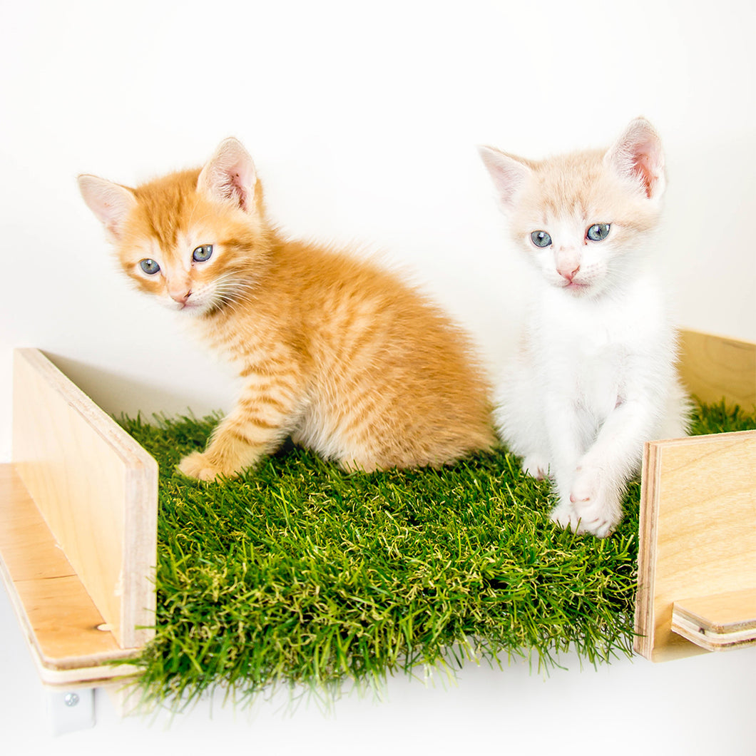 Cat Shelves (Set of Two)