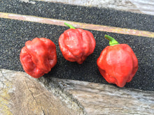 Load image into Gallery viewer, Scotch Bonnet Caramel (Pepper Seeds)