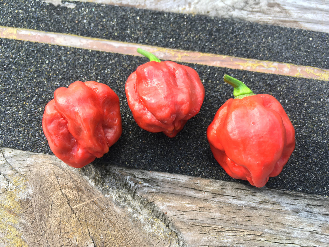 Scotch Bonnet Caramel (Pepper Seeds)