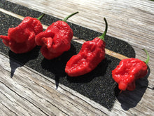 Load image into Gallery viewer, Bhutlah Red X Bubblegum Pepper Seeds