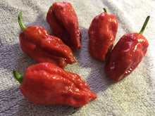 Load image into Gallery viewer, 7 Pot Caramel (Pepper Seeds)