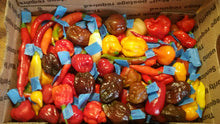 Load image into Gallery viewer, Fresh Assorted Labeled  Peppers (SFRB) {Choose Option}