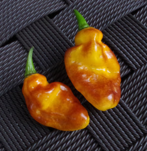 Pimenta Puma (Pepper Seeds)