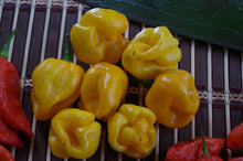 Load image into Gallery viewer, 7 Pot Yellow (Pepper Seeds)