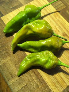 Bhut Jolokia Mustard (Pepper Seeds)