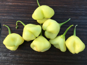 Sugar Rush Cream (Pepper Seeds)