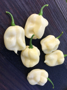 7 Pot White (Pepper Seeds)