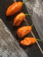 Load image into Gallery viewer, Pimenta Jolokia Orange (Pepper Seeds)
