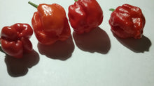 "Load image into Gallery viewer, 7 Pot ""007"" Red (Pepper Seeds)"
