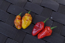 Load image into Gallery viewer, Pimenta Puma Red (Pepper Seeds)