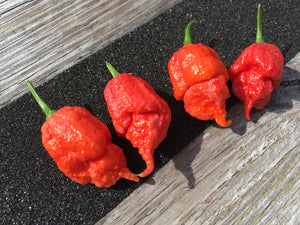 Apocalypse (Pepper Seeds)