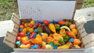 Fresh Assorted Labeled  Peppers (SFRB) {Choose Option}