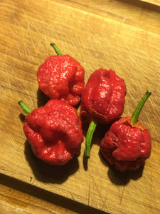 Bubblegum Scorpion (Pepper Seeds)