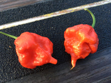 Load image into Gallery viewer, Scorpion Butch T. Red (Pepper Seeds)