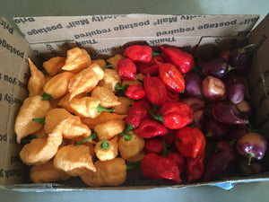 Fresh Specialty Select Box {Choose Option}
