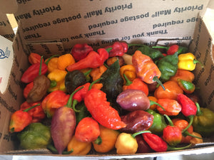 Fresh Assorted Unlabeled SuperHot Peppers (SFRB)
