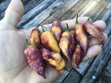 Load image into Gallery viewer, Yellow Tiger (Pepper Seeds)