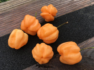 "Scotch Bonnet ""Peach"" (Pepper Seeds)"