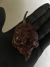 Load image into Gallery viewer, Apocalypse Chocolate (Pepper Seeds)