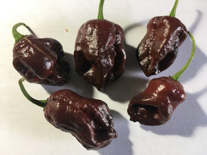 Bih Barak Chocolate (Pepper Seeds)