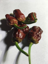Load image into Gallery viewer, 7 Pot Bubblegum Chocolate (Pepper Seeds)