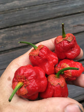 Load image into Gallery viewer, 7 Pot Bubblegum Large Red (Pepper Seeds)